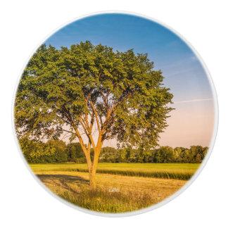 Handle of door, photograph of a tree in fields ceramic knob
