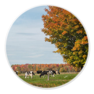 Handle of door, photograph of cows with tree ceramic knob