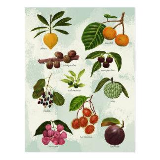 Handpainted Exotic Filipino Tropical Fruits Postcard