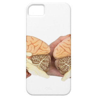 Hands holding model human brain on white iPhone 5 covers