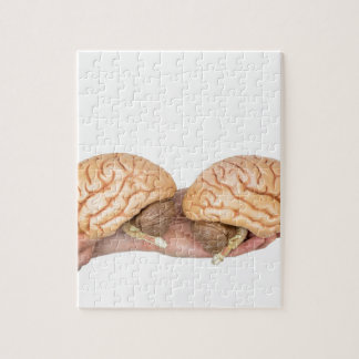 Hands holding model human brain on white jigsaw puzzle