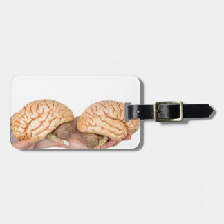 Hands holding model human brain on white luggage tag