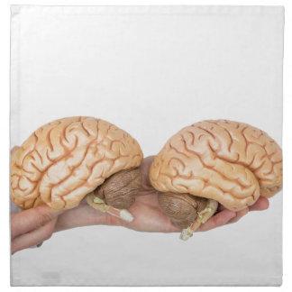 Hands holding model human brain on white napkin