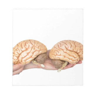 Hands holding model human brain on white notepad