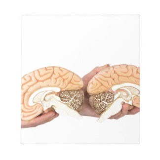 Hands holding model human brain on white notepads