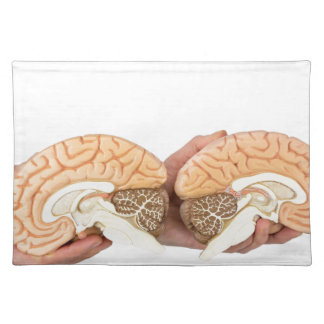 Hands holding model human brain on white placemat