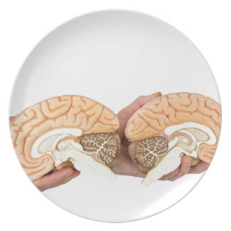 Hands holding model human brain on white plate