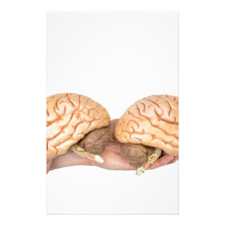 Hands holding model human brain on white stationery