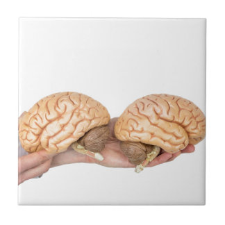 Hands holding model human brain on white tile