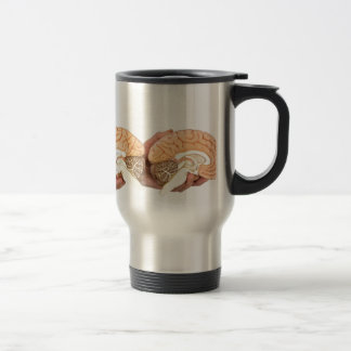 Hands holding model human brain on white travel mug