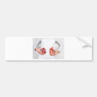Hands holding model of human kidney organ at body. bumper sticker