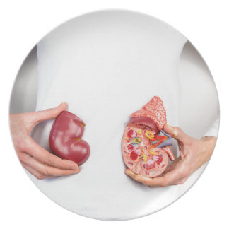 Hands holding model of human kidney organ at body. plate