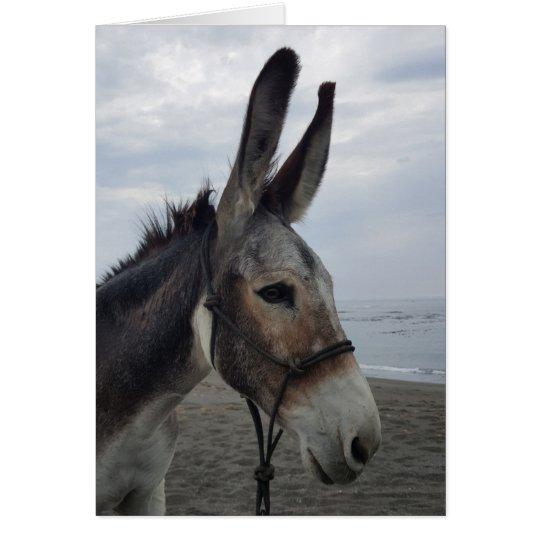 Handsome Beach Donkey Card