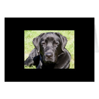 Handsome Black Lab Card