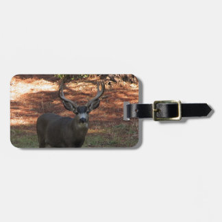 Handsome Blacktail Buck Luggage Tag