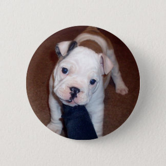 Handsome Bulldog Pinback Button
