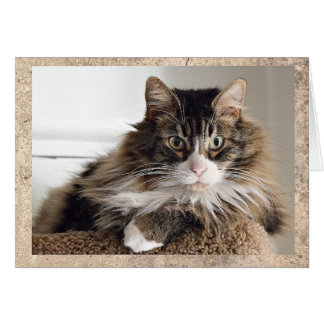 Handsome Cat Card