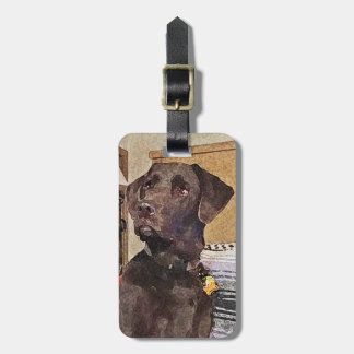 Handsome Chocolate Labrador Retriever Bag Tag