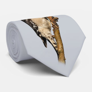 Handsome Downy Woodpecker on the Pear Tree Tie