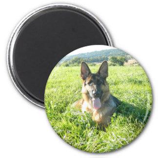 Handsome German Shepherd Dog Magnet