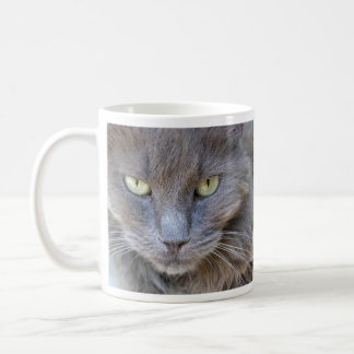 Handsome Gray Cat Staring at You Coffee Mug