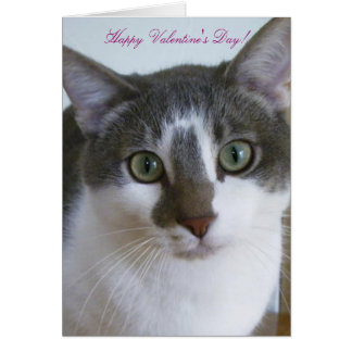 Handsome Grey and White cat-Valentine's Day Card