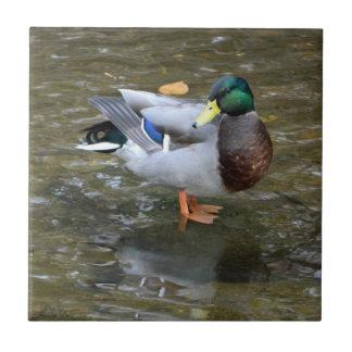 Handsome Mallard Duck (Male) Ceramic Tile