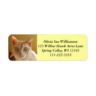 Handsome orange cat #2 return address label