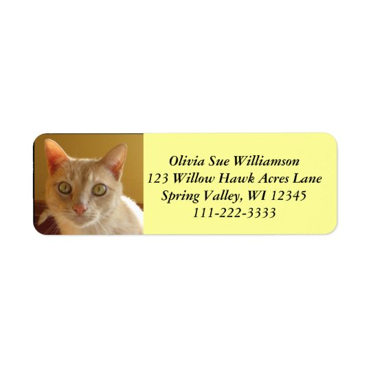 Handsome orange cat #2 return address label