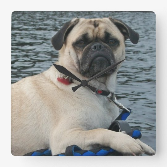 Handsome Pug Dog Wall Clocks