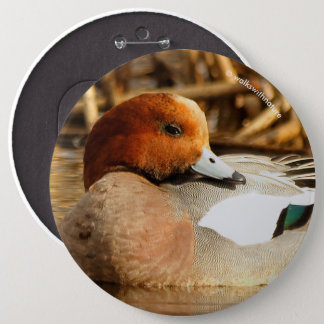 Handsome Stranger in Town Eurasian Wigeon 6 Inch Round Button