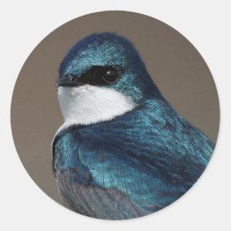 Handsome Tree Swallow: Bird on a Wire Round Sticker