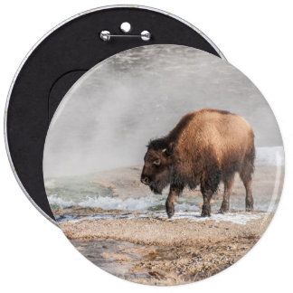 Handsome Young Bison or Buffalo 6 Inch Round Button
