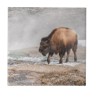 Handsome Young Bison or Buffalo Ceramic Tile