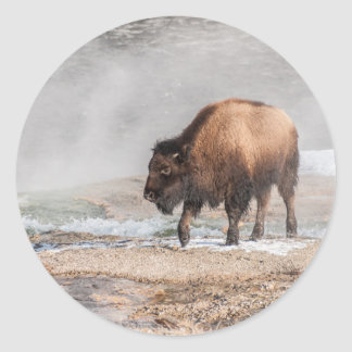 Handsome Young Bison or Buffalo Classic Round Sticker