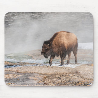 Handsome Young Bison or Buffalo Mouse Pad