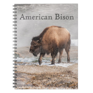 Handsome Young Bison or Buffalo Notebooks