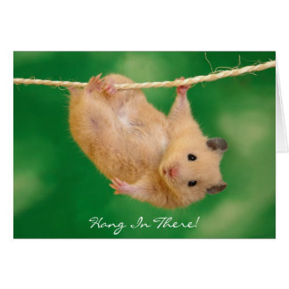 Hang In There! Hamster Card