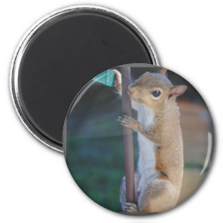 Hang in There Squirrel Magnet
