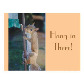 Hang in There, Squirrel Postcard