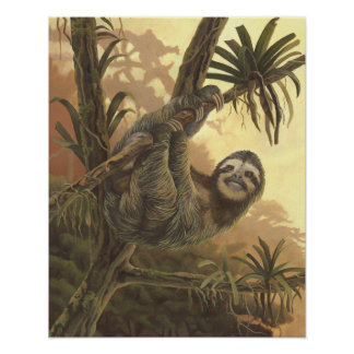 Hangin' In There - Three toed Sloth Poster
