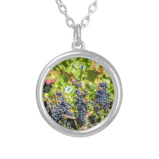Hanging blue grape bunches in vineyard silver plated necklace