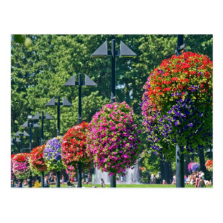 Hanging Flower Baskets Postcard