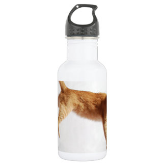 Hanging in There 532 Ml Water Bottle