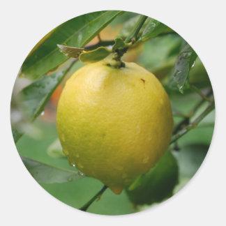 Hanging Lemon Classic Round Sticker