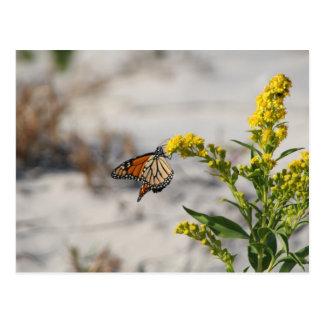 Hanging On Monarch Postcard