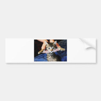 Hanging Out Tabby Bumper Sticker