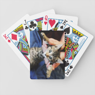 Hanging Out Tabby Poker Deck
