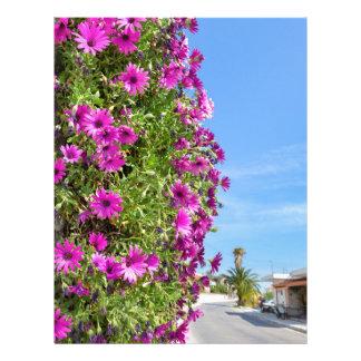 Hanging pink spanish daisies on wall near street letterhead