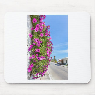 Hanging pink spanish daisies on wall near street mouse pad